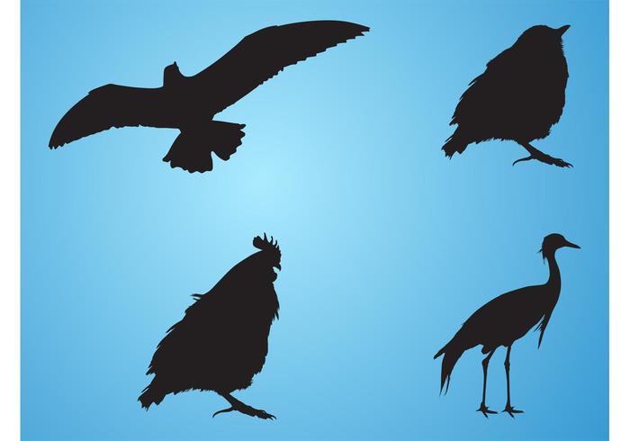 700x490 Bird Silhouettes