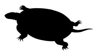 320x179 Turtle Silhouette 3 Decal Sticker