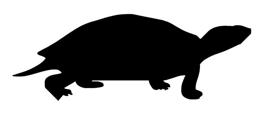 854x372 Turtle Silhouettes