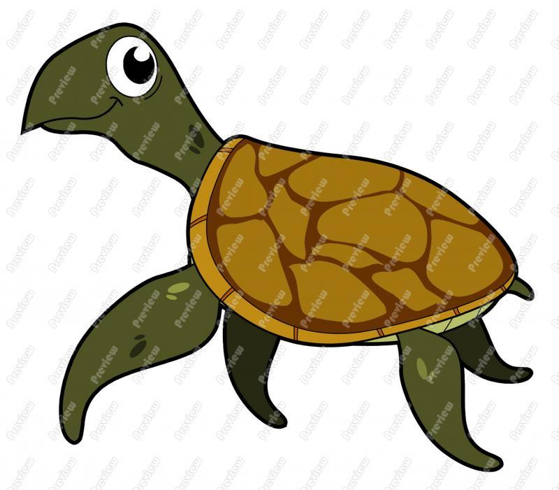 800x701 Sea Turtle Clipart Box Turtle
