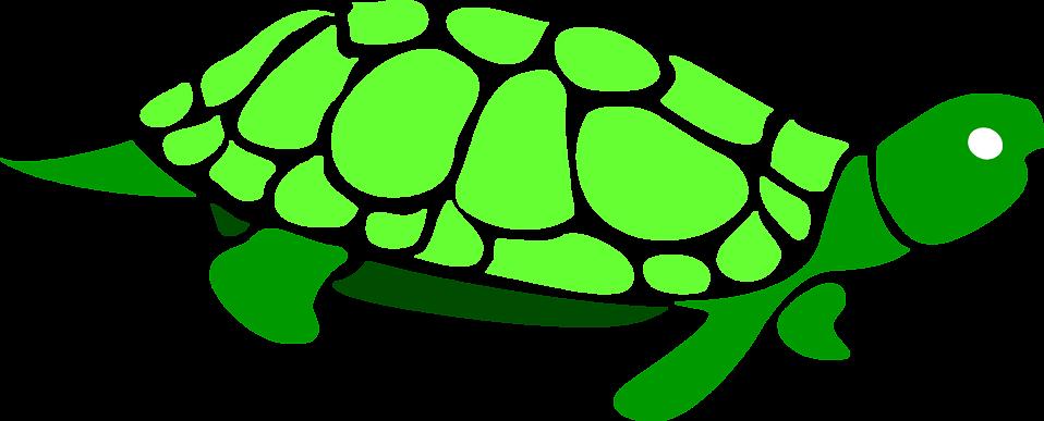 958x387 Turtle Clipart Transparent Background