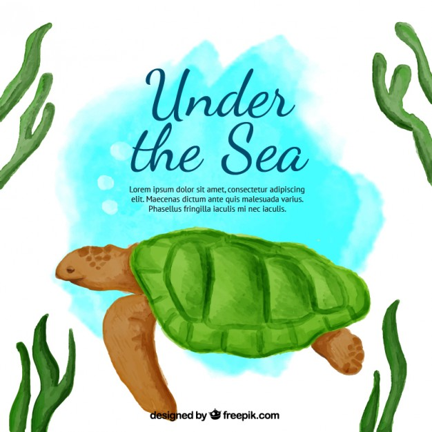626x626 Cute Watercolor Background With A Turtle Vector Free Download