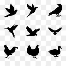 260x260 Tweety Bird Cartoon Black And White Clip Art