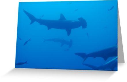 441x283 Silhouette Of Scalloped Hammerhead Sharks (Sphyrna Lewini