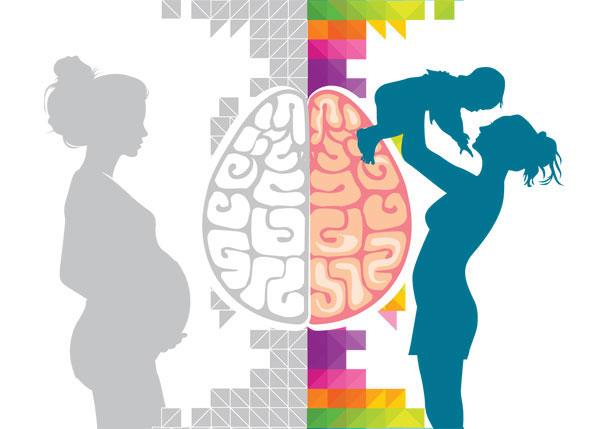 600x429 Brains On Hormones