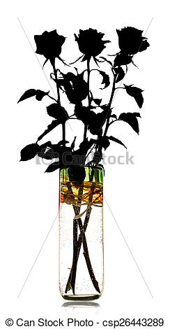 244x470 Silhouette Of Roses In A Vase On A White Background Pictures