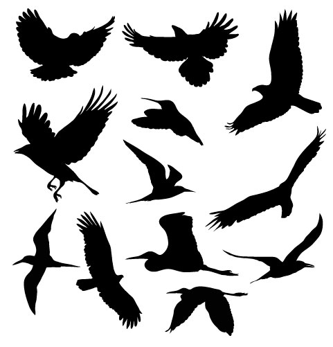 Vector Bird Silhouette