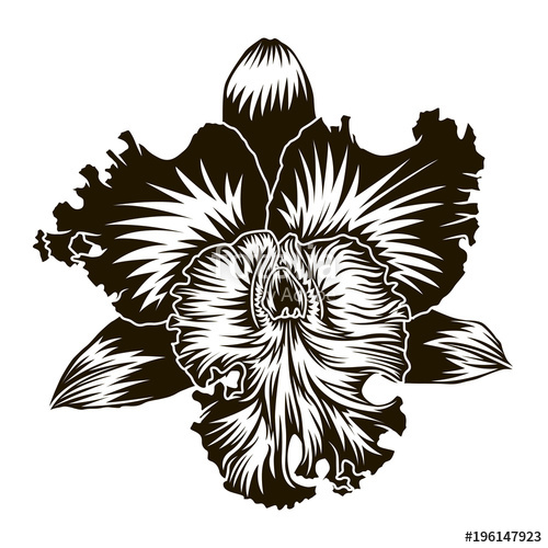 500x500 Floral Element Orchid Flower Silhouette Isoleted On White