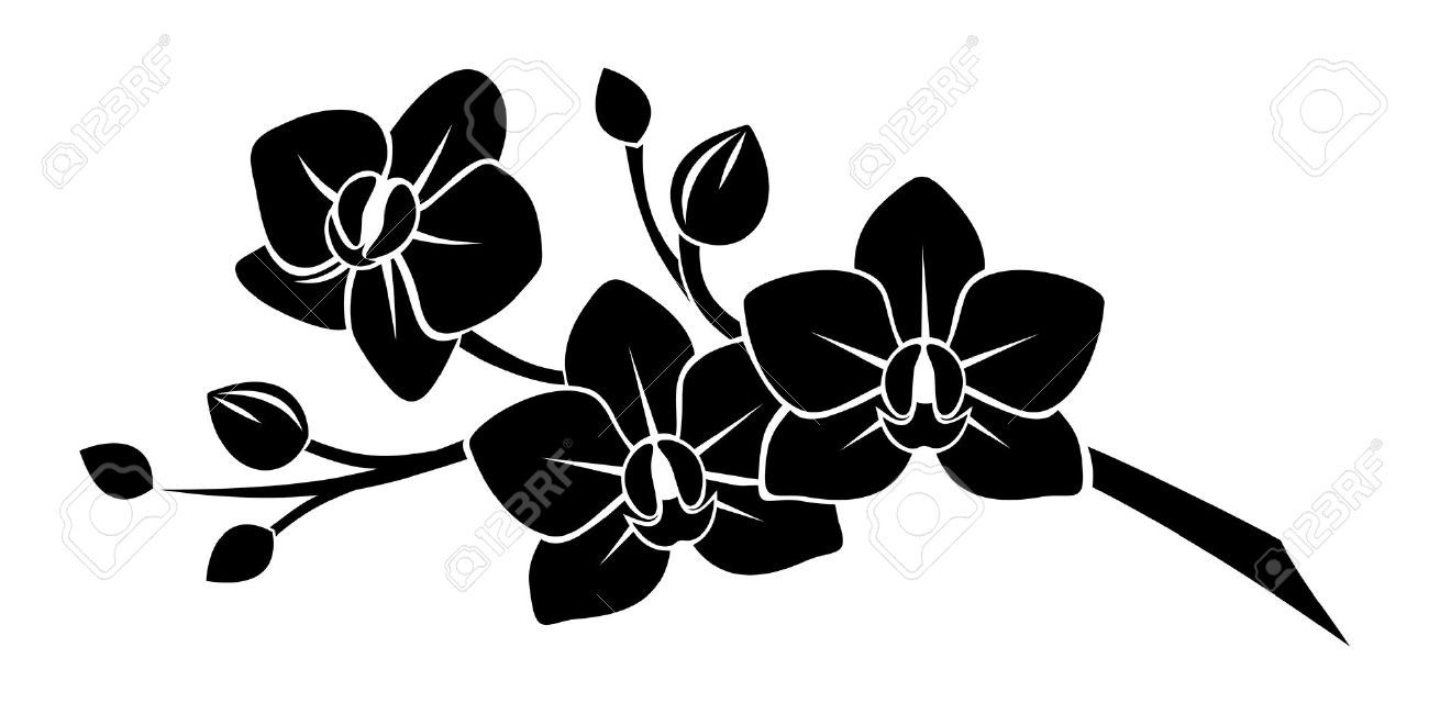 1300x650 21781860 Black Silhouette Of Orchid Flowers Stock Vector Flower