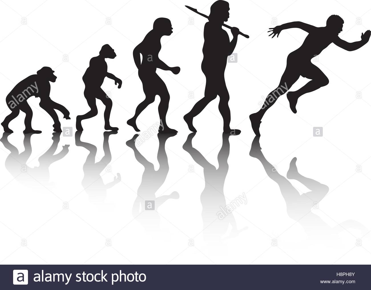 1300x1017 The Evolution, Silhouette People. Darwin S Theory. Vector Stock