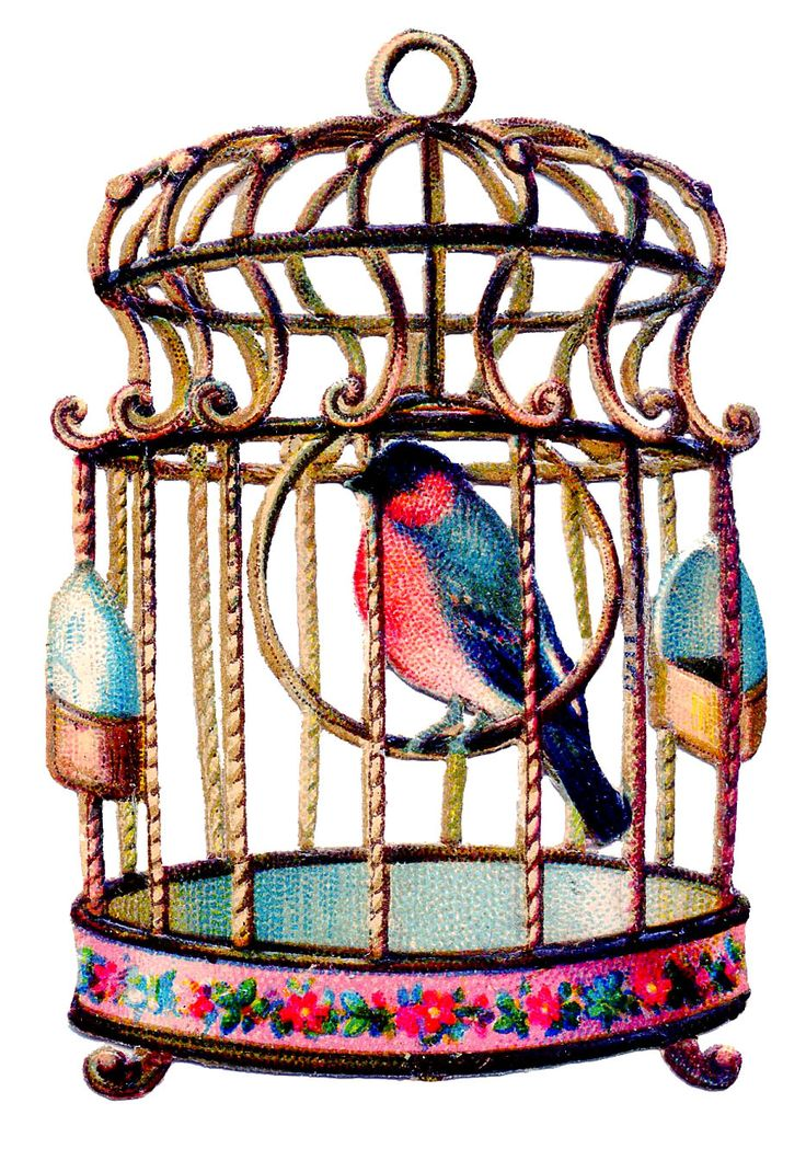 736x1049 Victorian Clipart Birdcage 4031220