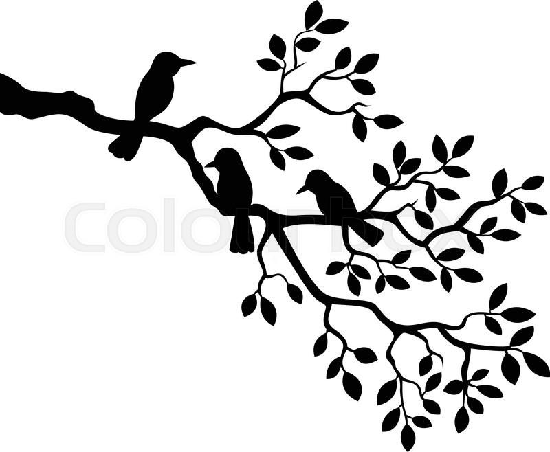 800x658 Drawn Bird Tree Limb