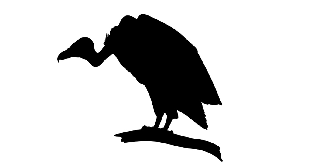 1024x543 Only 260 Vultures Left In Bangladesh Dhaka Tribune