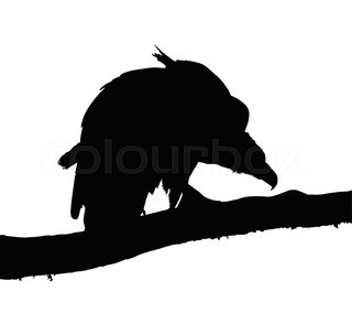 320x284 Silhouette Of Vulture Stock Vector Colourbox