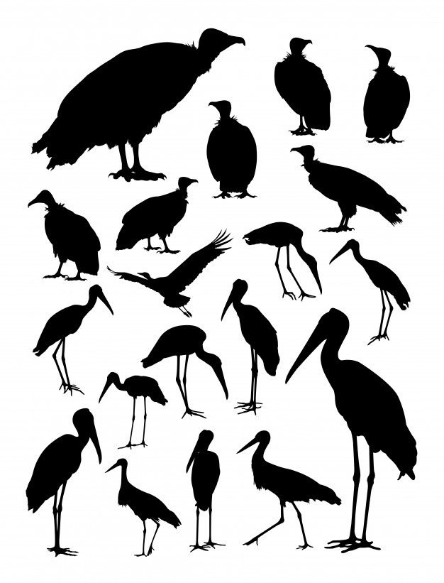 626x821 Stork And Vulture Silhouette Vector Premium Download