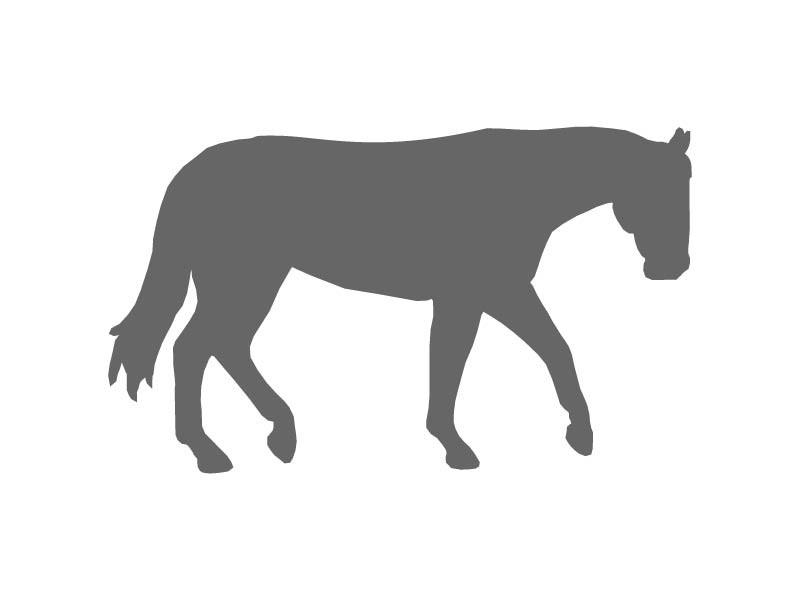 800x600 Walking Horse Stencil