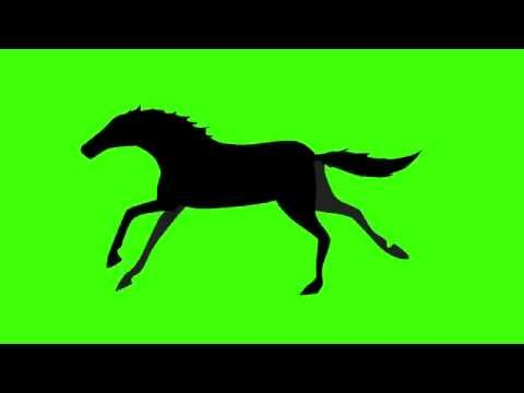 480x360 Free Hd Video Backgrounds Horse Silhouette Walking On Green