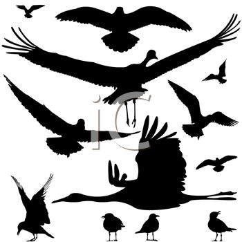 350x350 Silhouette Of Different Kinds Of Water Birds