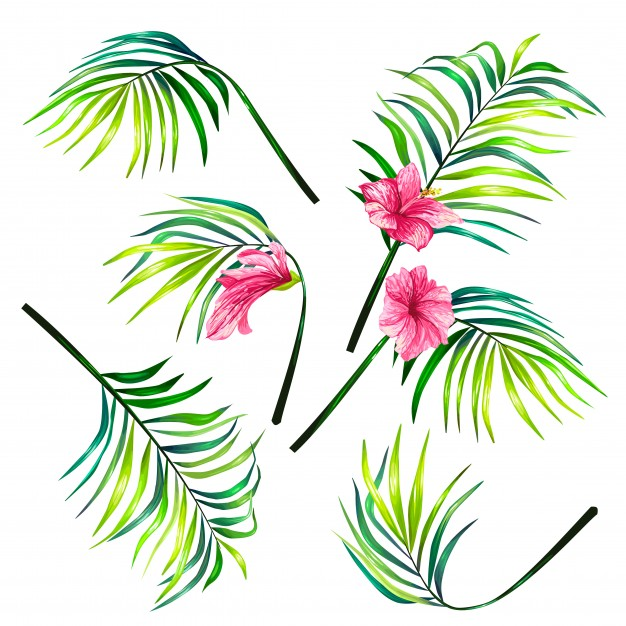 626x626 Hibiscus Vectors, Photos And Psd Files Free Download