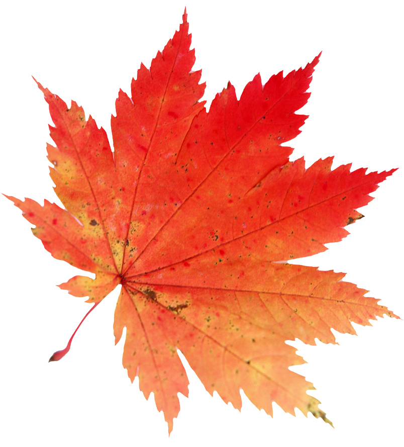 804x889 Pin By Sarka Barakova On Clip Leaves, Autumn