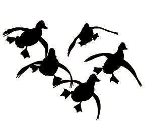 288x242 Cupped Duck Window Decal Window, Cups And Cricut