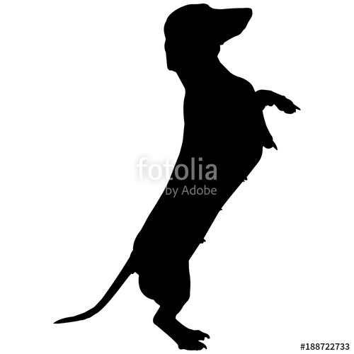 500x500 Dachshund Dog Silhouette Vector Graphics Stock Image And Royalty