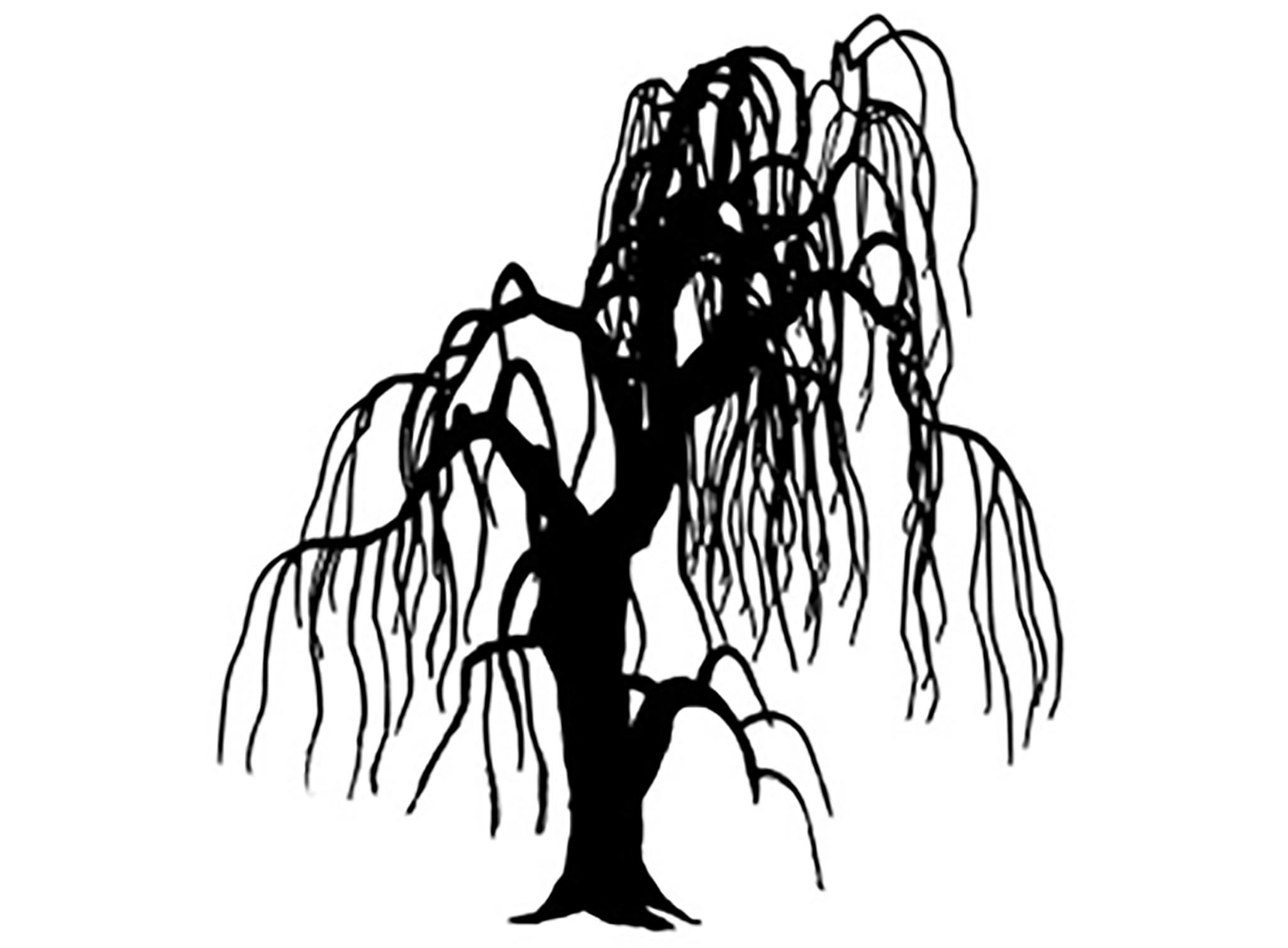 2048x1507 Tree Weeping Willow 1 Decals