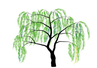 339x240 Weeping Willow Photos, Royalty Free Images, Graphics, Vectors