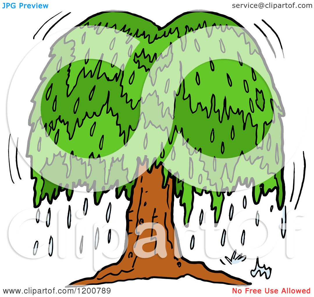 1080x1024 Cartoon Of A Weeping Willow Tree With Tears