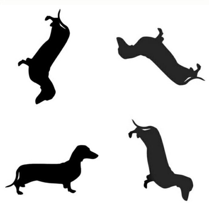 689x688 Dachshund Doxie Graphics Dachshunds, Weiner Dogs