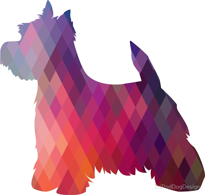 800x762 West Highland White Terrier