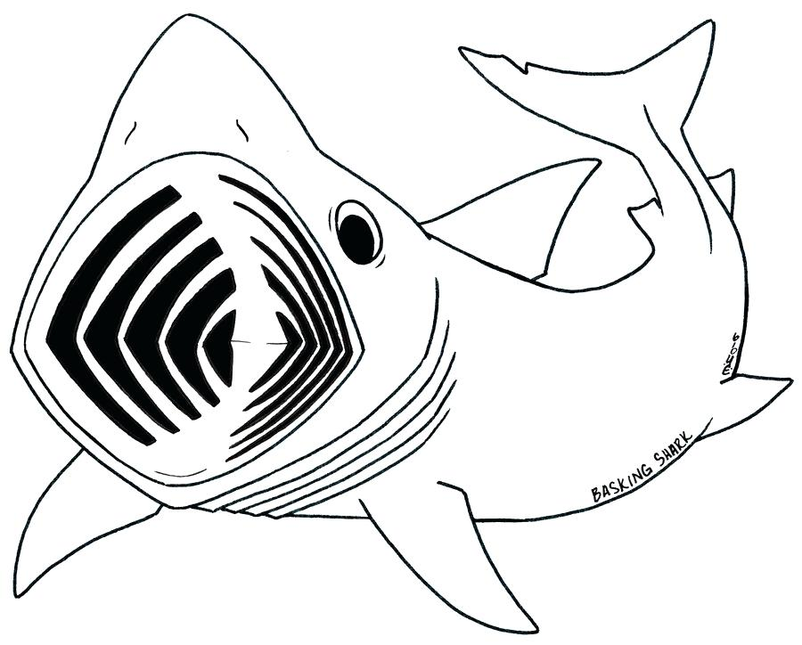 900x724 Whale Outline Whale Shark Outline Stock Photos Amp Whale Shark