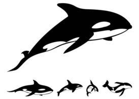 274x195 Whale Shark Clip Art, Free Vector Whale Shark