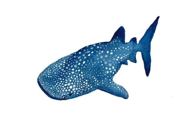 570x407 Whale Shark Watercolor Print 5 X 7 Whale Sharks, Watercolor