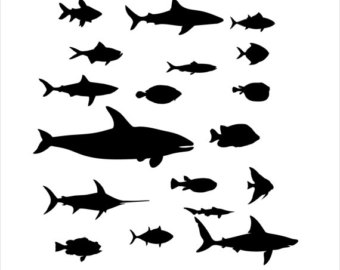 340x270 Whale Shark Decal Etsy