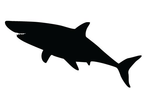 500x350 Mako Shark Clipart Stencil