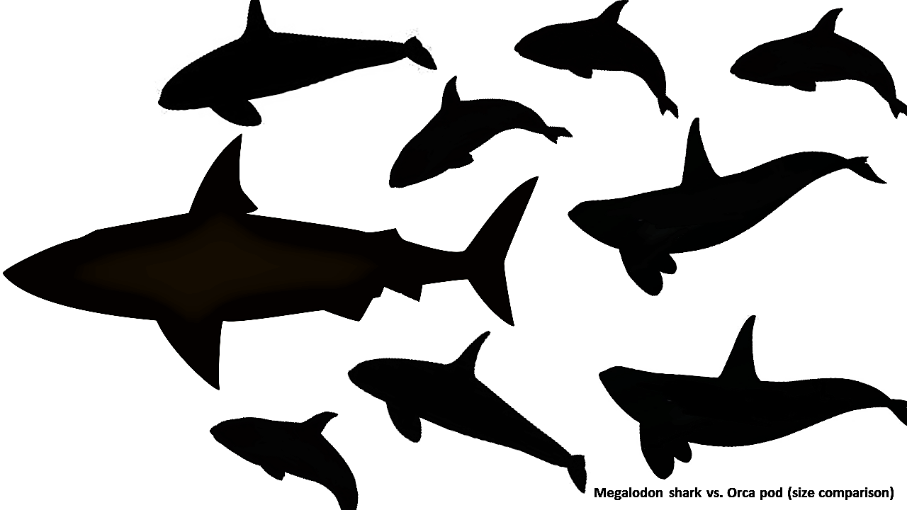 1280x720 Megalodon Versus Killer Whale Who Would Win By Max Hawthorne