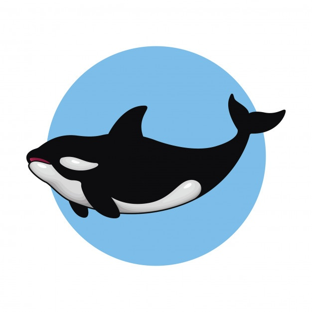 626x626 Orca Vectors, Photos And Psd Files Free Download