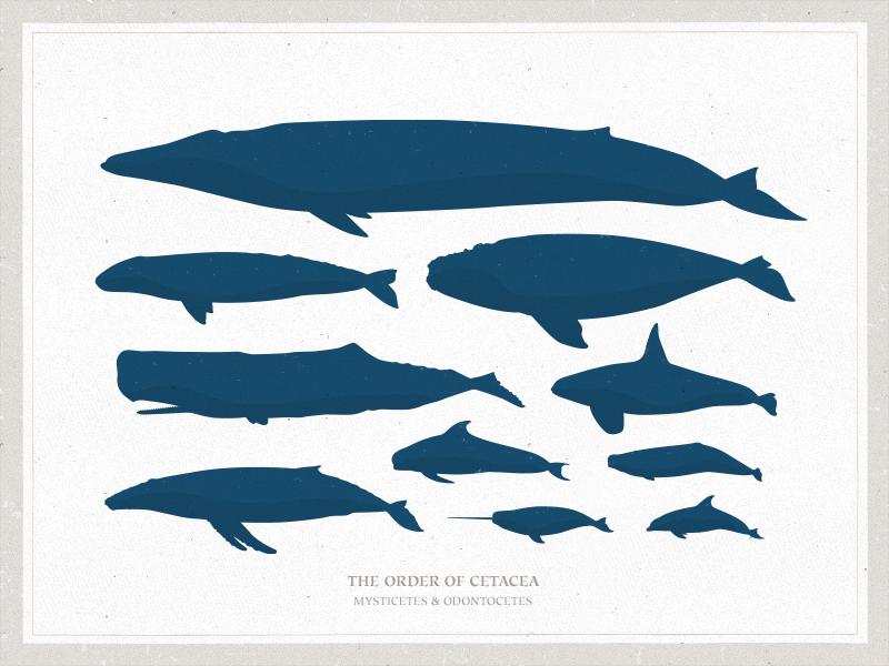 800x600 Smo5. Rhetorical Heterogeneity, Cf. Duval (1843). Whale