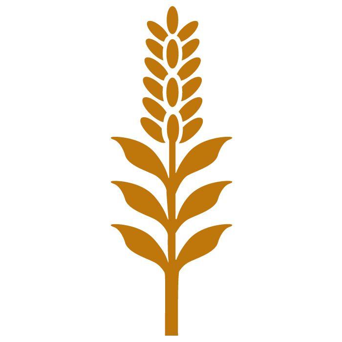 700x700 Wheat Svg, Botanical Svg, Rose Svg, Pansy, Herbs, Garden, Home