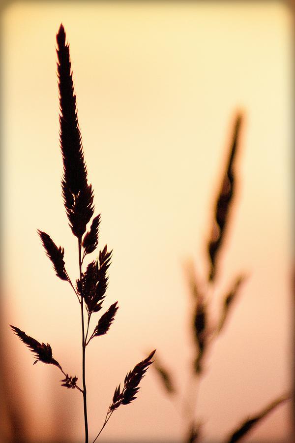 600x900 Wild Wheat Silhouette