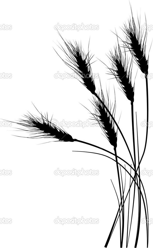 631x1023 Wheat Tattoo Want With Pretty Bow And More Wheat A Bundle