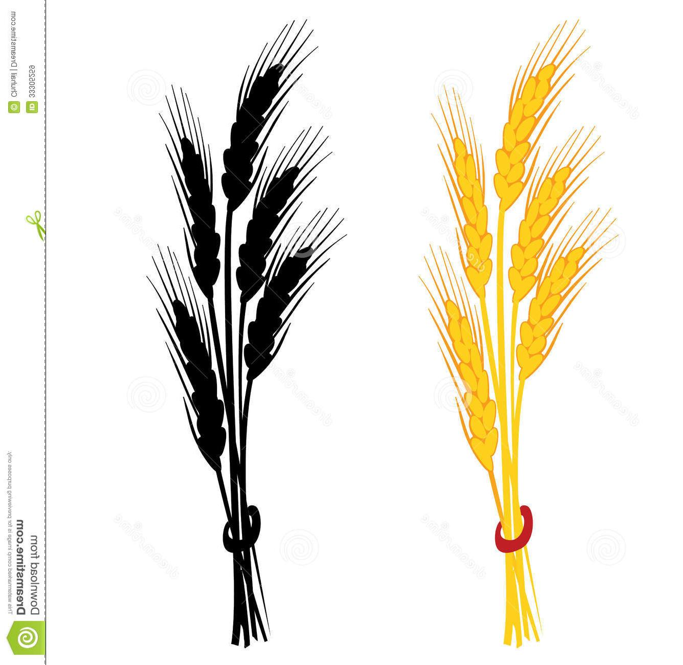 1335x1300 Best Wheat Ear Vector Illustration Yellow Black Silhouette