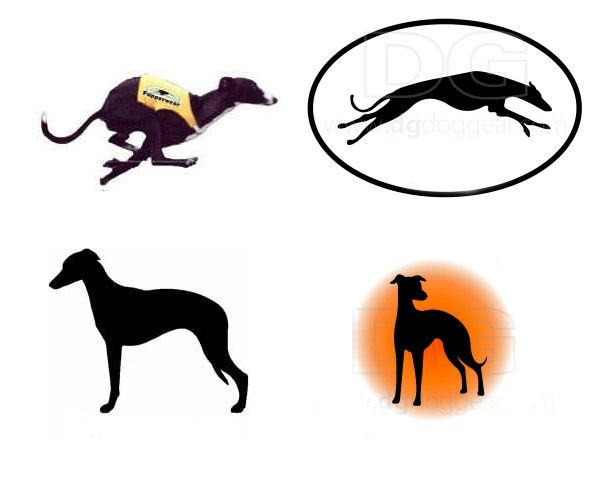 611x488 Whippet Silhouettes Sighthounds Whippets, Dog