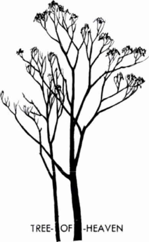 508x827 Tree Silhouettes