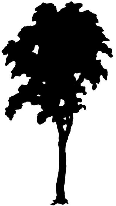 395x700 Tree Silhouette Clipart 18 Clipart Panda