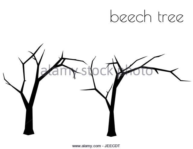 640x495 Beech Tree Silhouette Stock Photos Amp Beech Tree Silhouette Stock