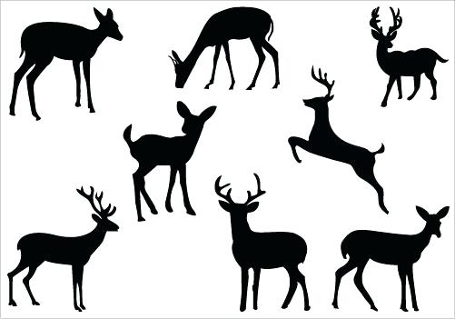 501x351 Deer Hunting Coloring Pages Deer Color Pages Free Deer Coloring