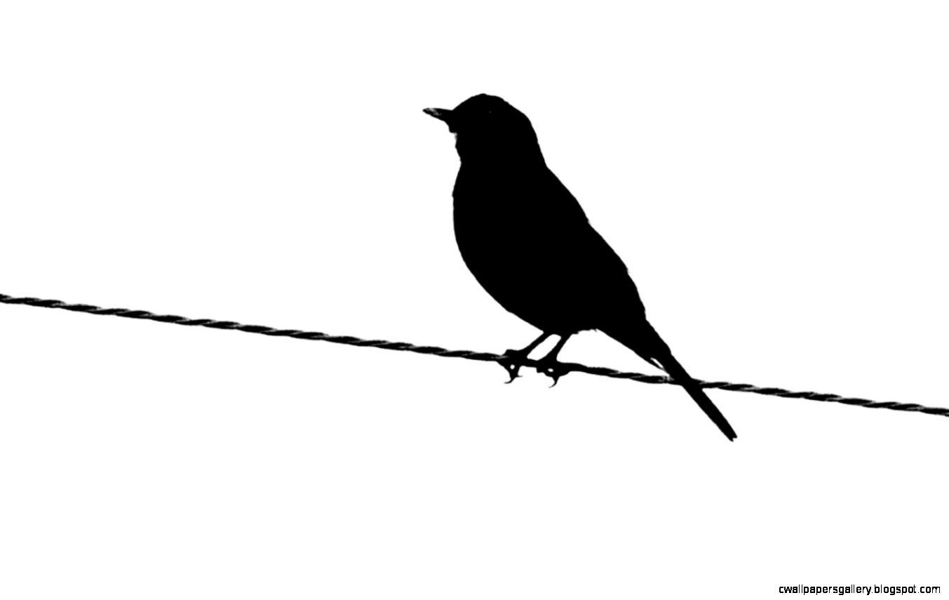 1353x855 Flying Bird Silhouette Wallpaper Wallpapers Gallery