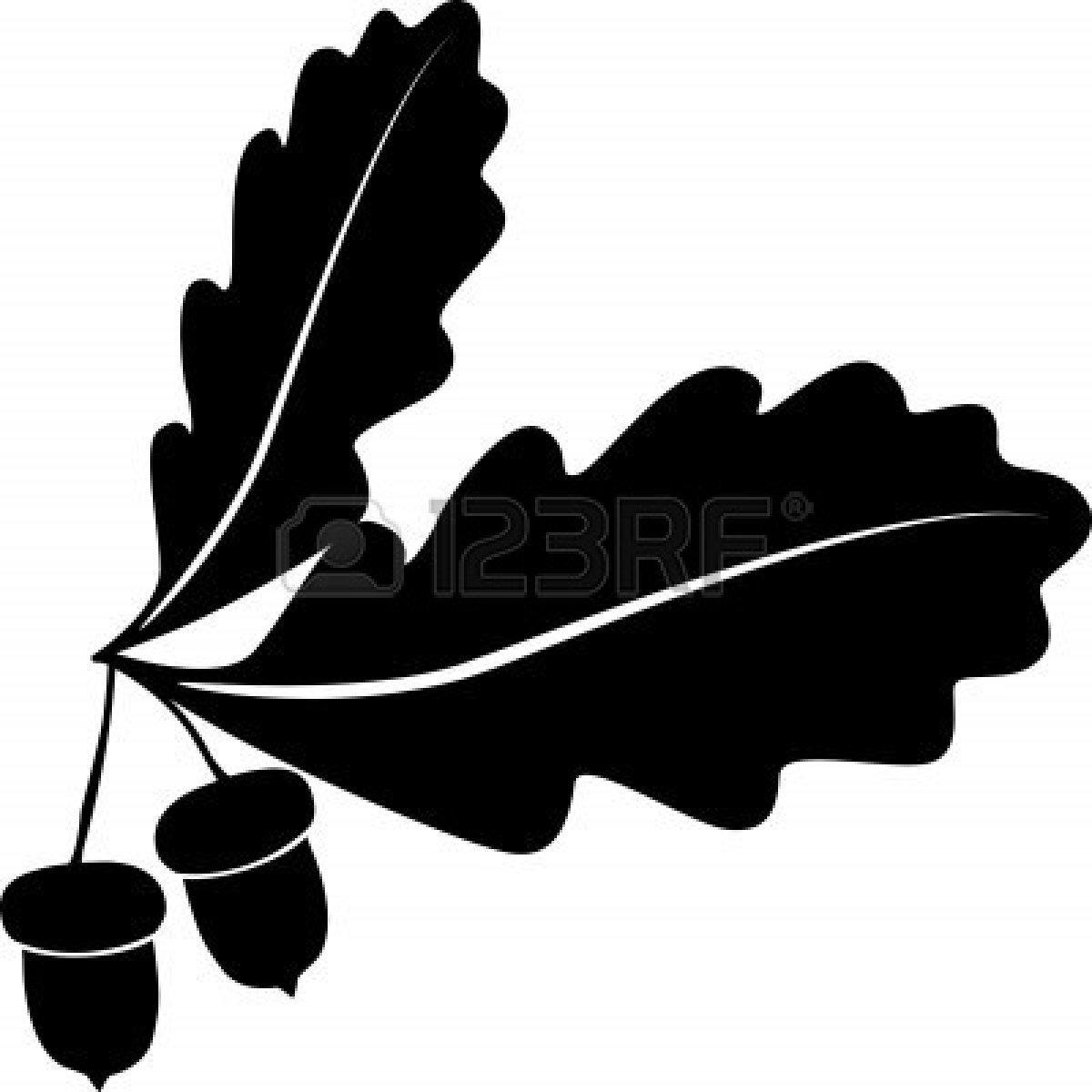 1200x1200 Unique Oak Tree Vector Free Download Acornl Style Images